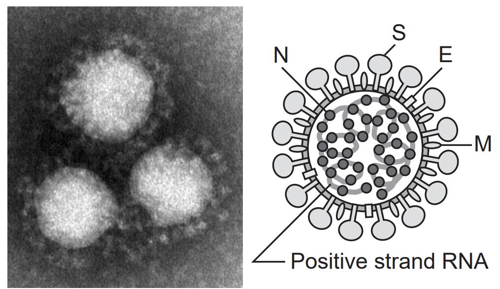新型コロナウイルス2020年