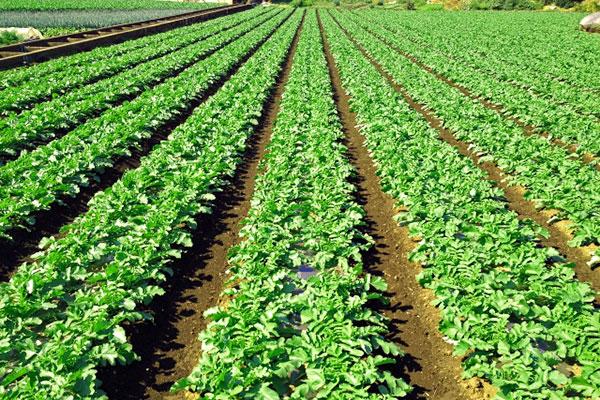 農地 生産緑地